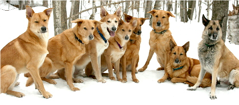 Chinook Dogs Club