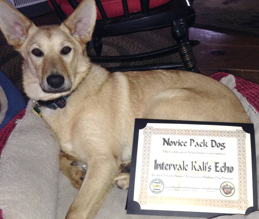 Intervale Kali's Echo earns hear Novice Pack Title