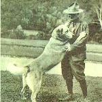 Arthur Walden with his  Chinook. There are several different photos of Chinook standing tall, with his paws up on Walden.