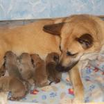 Newborn Jazzy Pups (The 7th pup is way under her rear leg)